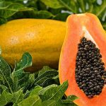 Papaya consumption is unsafe in pregnancy: Fact or Fable?